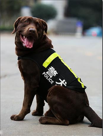 什么样的狗适合做警犬?